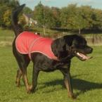 Hi-vis dogs vest (HVDW15)